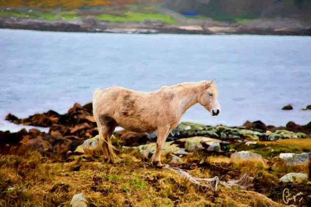 connemara-pony-oil3-6jt-cqcl.jpg