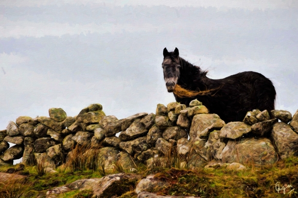 connemara-pony2-oil-6jt-cqcl.jpg