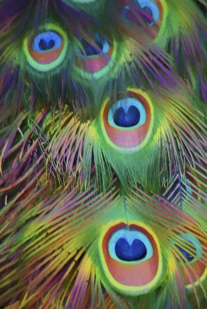 feathers-pastel-85g-1zqx.jpg