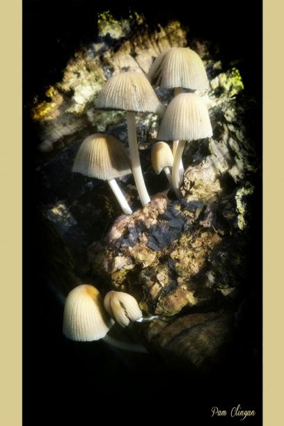 fungi-1-g10-k5f1.jpg