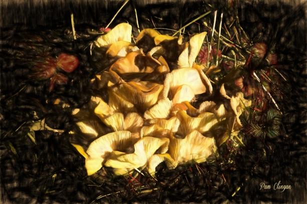 fungi-3-g10-k5f1.jpg