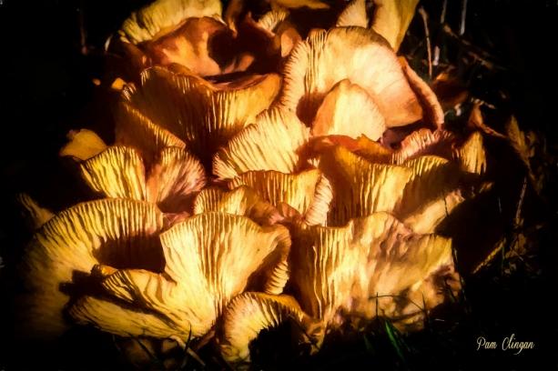fungi-4-g10-k5f1.jpg