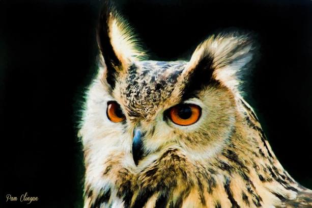 owl-oil-2-85g-1zqx.jpg