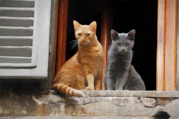 roman-cats-oil-q2s-4jjn.jpg