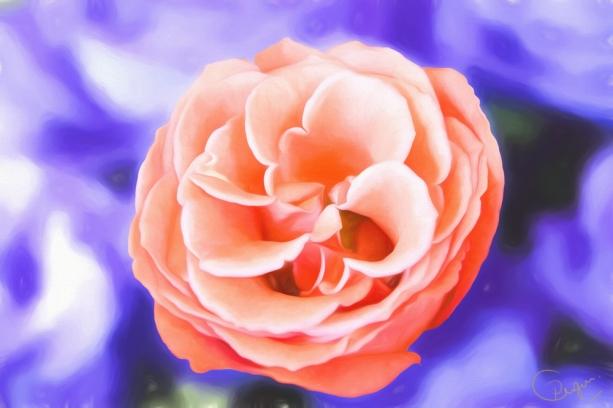 rose-oil-g10-k5f1.jpg