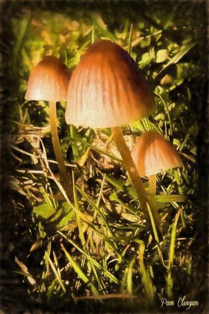 tiny-fungi-g10-k5f1.jpg