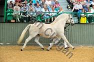 2011 BCPS Stallions